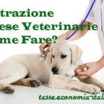 Detrazione Fiscale Spese Veterinarie 2020 su Animali Domestici, Come Ottenerla